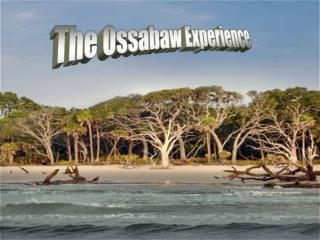 The Ossabaw Experience