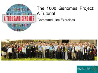 The 1000 Genomes Project: A Tutorial