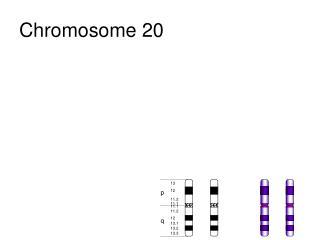 Chromosome 20