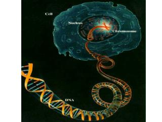 DNA is a polymer made of repeating subunits called nucleotides .