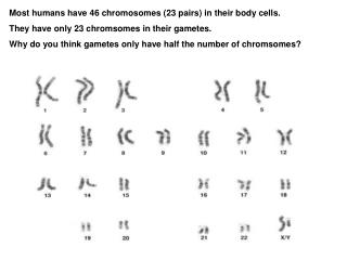 Most humans have 46 chromosomes (23 pairs) in their body cells.