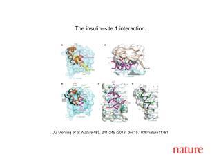 JG Menting  et al. Nature  493 , 241-245 (2013) doi:10.1038/nature11781
