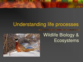 Understanding life processes