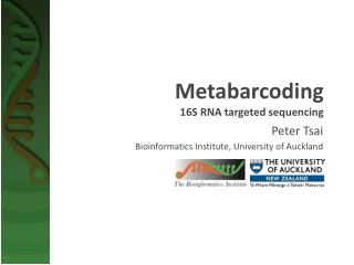 Metabarcoding 16S RNA targeted sequencing