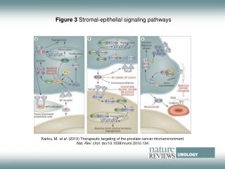 Figure 3  Stromal-epithelial signaling pathways