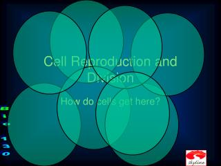 Cell Reproduction and Division