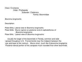 Class: Crustacea                 Order: Phyllopoda