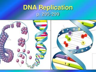 DNA Replication p. 295-299