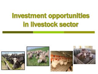 Investment opportunities in livestock sector