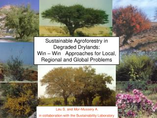 Sustainable Agroforestry in Degraded Drylands:  Win   Win   Approaches for Local, Regional and Global Problems