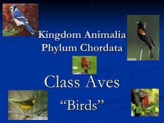Kingdom Animalia Phylum Chordata