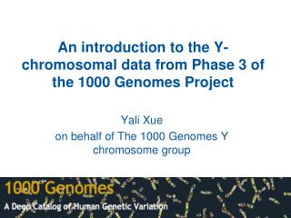 An introduction to the Y-chromosomal data from Phase 3 of the 1000 Genomes Project