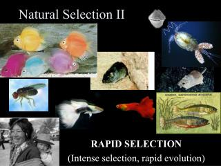 Natural Selection II
