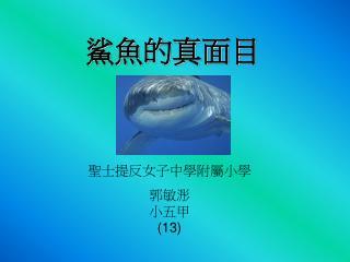 鯊魚的真面目