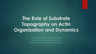 The Role of Substrate Topography on Actin Organization and Dynamics