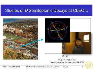 Studies of  D  Semileptonic Decays at CLEO-c