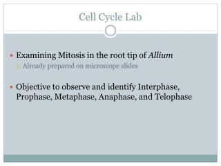 Cell Cycle Lab