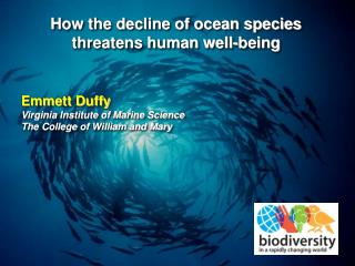 How the decline of ocean species  threatens human well-being