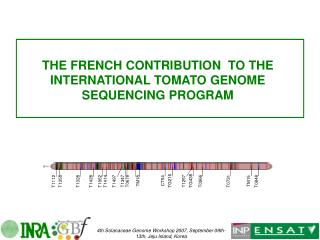 THE FRENCH CONTRIBUTION  TO THE INTERNATIONAL TOMATO GENOME SEQUENCING PROGRAM