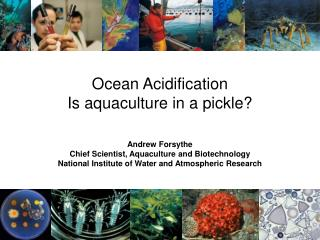Ocean Acidification Is aquaculture in a pickle?