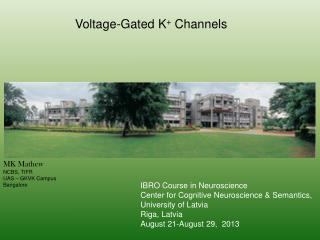 Voltage-Gated K +  Channels