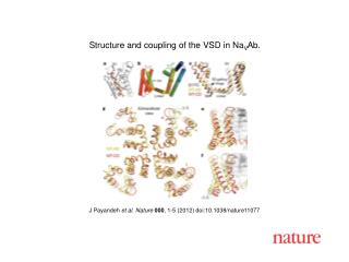 J Payandeh  et al .  Nature 000 ,  1-5  (2012) doi:10.1038/nature11077