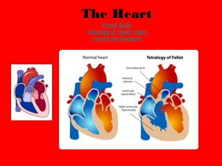 The Heart Virtual Body Tetralogy of Heart Video You be the Surgeon