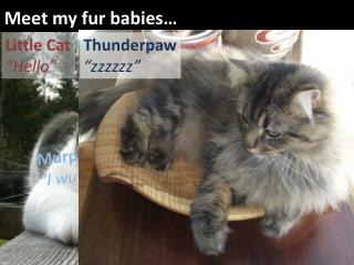 Meet my fur babies…