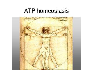 ATP homeostasis