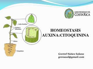 HOMEOSTASIS AUXINA:CITOQUININA