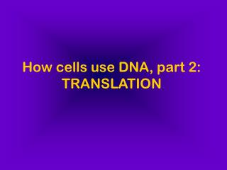 How cells use DNA, part 2: TRANSLATION