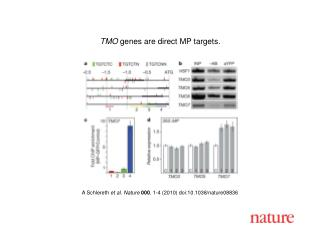 A Schlereth  et al.  Nature 000 ,  1 - 4  (2010) doi:10.1038/nature08 836