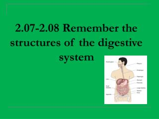 2.07-2.08  Remember the structures of the digestive system