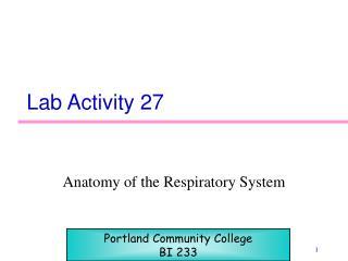 Lab Activity 27