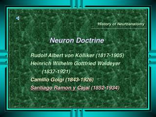 Neuron Doctrine  Rudolf Albert von K lliker 1817-1905 Heinrich Wilhelm Gottfried Waldeyer          1837-1921  Camilio Go
