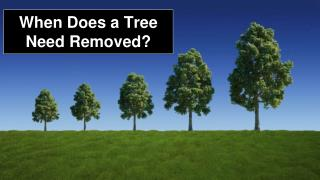 When Does a Tree Need Removed?