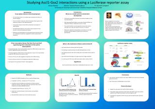 Studying Ascl1-Gsx2 interactions using a Luciferase reporter assay