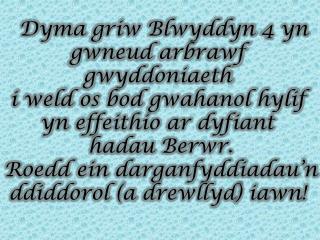 Arbrawf Gwydd Bl 4 Cym
