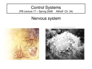 Control Systems  (PB Lecture 17 – Spring 2008     Althoff  Ch. 34)