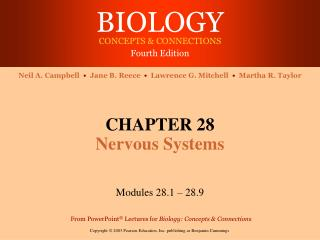 CHAPTER 28 Nervous Systems