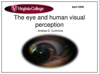 The eye and human visual perception