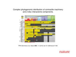 PRH Steinmetz  et al.  Nature 000 ,  1-4  (2012) doi:10.1038/nature 11180