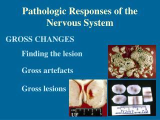 Pathologic Responses of the Nervous System