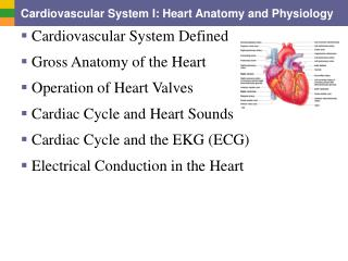 Cardiovascular System I: Heart Anatomy and Physiology