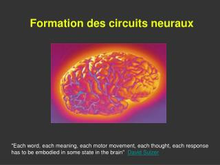 Formation des circuits neuraux