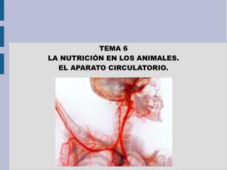 TEMA 6 LA NUTRICIÓN EN LOS ANIMALES.  EL APARATO CIRCULATORIO.