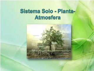 Sistema Solo - Planta- Atmosfera