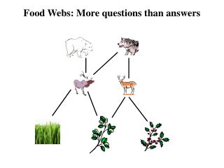 Food Webs: More questions than answers