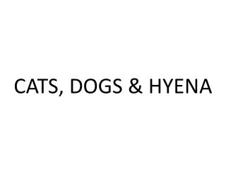 CATS, DOGS & HYENA