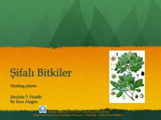Sifali Bitkiler